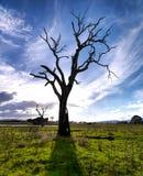 zmierzchu drzewo Obrazy Stock