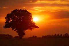 zmierzchu energetyczny naturalny dębowy drzewo Zdjęcia Royalty Free