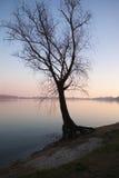 zmierzchu jeziorny drzewo Obraz Stock
