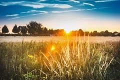 Zmierzchu krajobraz z trawą i polem Wsi natury tło Obraz Royalty Free