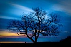 zmierzchu nagi drzewo Fotografia Royalty Free