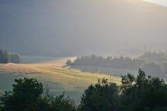Zmierzchu nieba i lasu natury sceneria w wieczór Obraz Stock