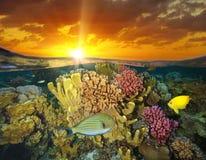 Zmierzchu niebo i kolorowa rafy koralowej ryba podwodni zdjęcie royalty free