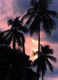 Zmierzchu niebo przez kokosowego drzewa Obraz Stock