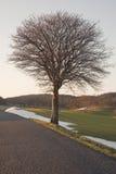 zmierzchu osamotniony drzewo obraz stock