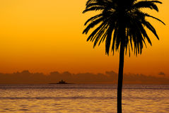 zmierzchu palmowy drzewo Zdjęcia Royalty Free