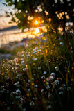 Zmierzchu słońca trawy rosa zdjęcia stock