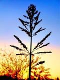 Zmierzchu tło||piękny liść|| kolorowy niebo||abstrakt obraz royalty free