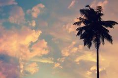 Zmierzchu tło z sylwetką palma w niebie z wiele jaskrawymi chmurami niebo abstrakcyjne kosmos kopii Obrazy Royalty Free