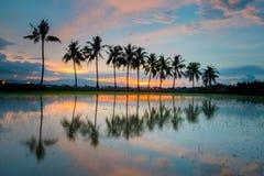 Zmierzchu widok kokosowi drzewa Zdjęcia Stock