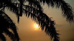 Zmierzchu widok przez kokosowego drzewko palmowe liścia na tropikalnym morzu miejsca przeznaczenia szkła target885_0_ mapy podróż zbiory