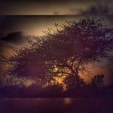 Zmierzchu widok z drzewem Zdjęcia Royalty Free