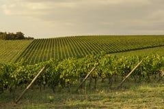 Zmierzchu winnica - Tuscany zdjęcia stock