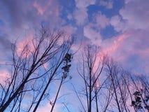Zmierzchu wschód słońca niebo z górą i drzewem obraz royalty free