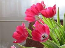 zmieszać bukietów gradientów cyfrowy tulipanu ilustracji obraz stock