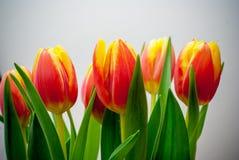 zmieszać bukietów gradientów cyfrowy tulipanu ilustracji Zdjęcie Stock