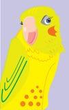 Zmieszana stawiająca czoło cockatiel papuga oczkuje Fotografia Stock