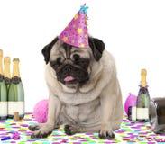 Zmizerowany mopsa szczeniaka pies jest ubranym partyjnego kapelusz, siedzący puszek na confetti karmiących up i pijących na szamp obrazy stock