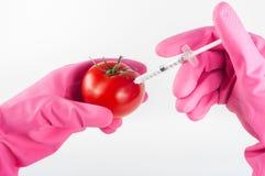 Zmodyfikowany pomidor Obrazy Stock