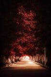 Zmrok - czerwona jesieni drzewa ścieżka Obrazy Royalty Free