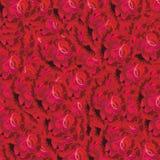 zmrok - czerwone róże Fotografia Stock