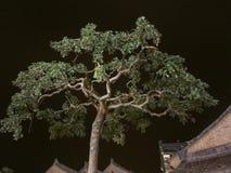 Zmrok drzewo Zdjęcia Royalty Free
