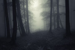 Zmrok nawiedzający las z mgłą Zdjęcie Royalty Free
