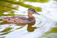 Zmrok w zieleni wodzie - Akcyjne fotografie zdjęcia royalty free