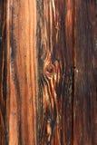 Zmrok więdnący drewno obrazy royalty free