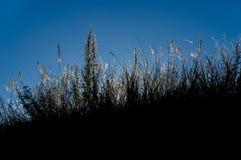 Zmroku kontur trawa przeciw niebieskiemu niebu Obrazy Royalty Free