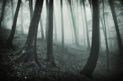 Zmroku krajobraz od lasu z czarny drzewami i fotografia royalty free