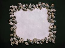 Zmroku kwadratowy flatlay z biel kopii przestrzenią seashell zdjęcia royalty free