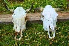 Zmyłka czaszki Zdjęcie Royalty Free