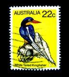 Znaczek drukujący w Australia pokazuje wizerunek biały Ogoniasty zimorodka ptak na wartości przy 22 centem Obrazy Royalty Free