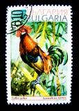 Znaczek drukujący w Bułgaria pokazuje wizerunek Gallus czerwieni junglefowl obrazy stock