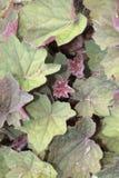 Znajduje twój wyjścia og te zieleni i purpur liście fotografia royalty free