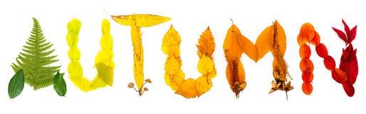 Znak & x22; Autumn& x22; robić jesienni naturalni przedmioty Zdjęcie Royalty Free