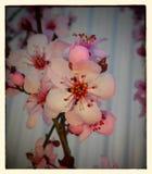 Znaki wiosna Zdjęcie Stock