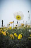 Znakomity kwiat Obrazy Stock