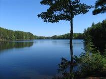 znaleźć odzwierciedlenie drzewo wody Fotografia Stock