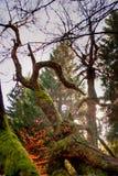 Zniekształcający drzewo zdjęcie stock