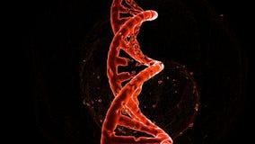 Zniszczenie czerwieni DNA molekuła na czarnym tle i kiść od błysku, odizolowywa Pojęcie zdjęcie royalty free