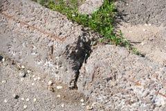 Zniszczony betonowy kraw??nik zdjęcie royalty free