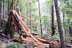 Zniszczony zniweczony drzewo składający od zniszczenia fotografia stock