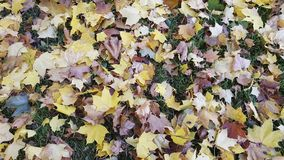 Zo is de herfst gekomen royalty-vrije stock foto's