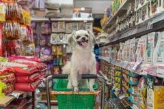 Zo leuke de hond wacht een huisdiereneigenaar bij dierenwinkel Stock Foto's
