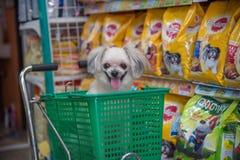 Zo leuke de hond wacht een huisdiereneigenaar bij dierenwinkel Royalty-vrije Stock Afbeeldingen