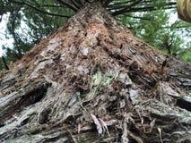 Zo sterk zoals een boom stock foto