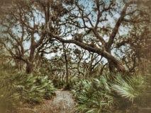 Zobaczył boczni palmy i Dębowych drzewa fotografia stock