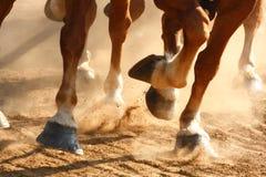 Zoccoli correnti dei cavalli Fotografie Stock
